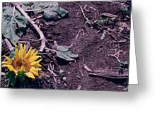 Trampled Sunflower Greeting Card