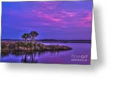 Tranquil Palms Greeting Card