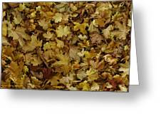 Transition Of Autumn Greeting Card