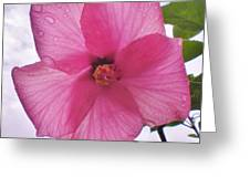 Translucent Flower After The Rain Greeting Card