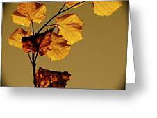 Translucent Leafs Greeting Card