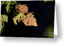 Translucent Maple Leaf Greeting Card