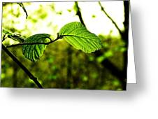 Transparent Greeting Card by Christian Rooney