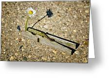 Trapped White Daisy Greeting Card