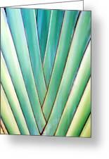 Travelers Palm 6 Greeting Card