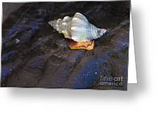 Traveling At A Snail's Pace Greeting Card