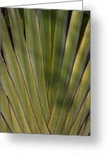Traveller's Palm Patterns Dthb1542 Greeting Card