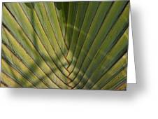 Traveller's Palm Patterns Dthb1543 Greeting Card