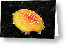 Treasures Of The Forest Two Greeting Card