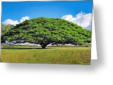 Tree 10 Greeting Card