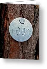 Tree 1001 Greeting Card