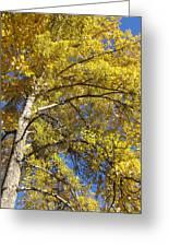 Tree 4 Greeting Card