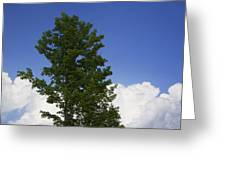 Tree Against A Cloudy Blue Sky In Vermont Greeting Card