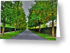 Tree Alley Greeting Card