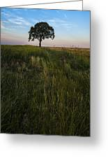 Tree Alone Greeting Card