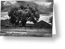 Tree And Barn 1 Bw Greeting Card