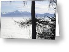 Tree And Fog Greeting Card