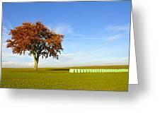 Tree And Hay Bales Greeting Card