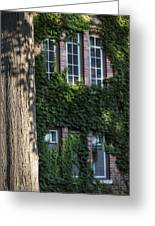 Tree And Ivy Windows Michigan State University Greeting Card