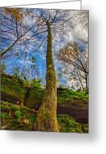 Tree And Rocks Greeting Card