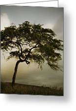 Tree And Stormy Sky Greeting Card