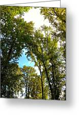 Tree Arches At Clackamette Park Greeting Card