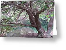 Tree At Boat House Greeting Card