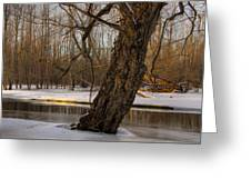 Tree At Collins Creek 2 Greeting Card