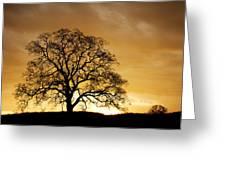 Tree At Golden Sunrise Greeting Card