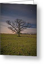 Tree At Night Greeting Card