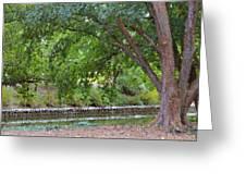 Tree At Norfolk Botanical Garden 4 Greeting Card