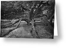 tree at Normanby Park Greeting Card