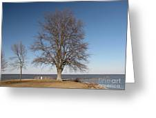Tree At Sandy Point Greeting Card