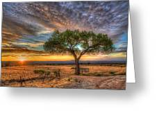 Tree At Sunset Greeting Card by William Wetmore