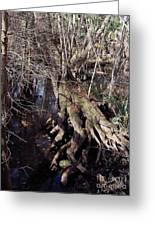 Tree Roots At The River Greeting Card