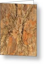 Tree Bark Abstract Greeting Card