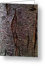 Tree Bark To The Left Greeting Card