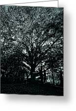 Tree Black And White Greeting Card