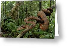Tree Boa Greeting Card by Francesco Tomasinelli