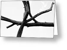 Tree Branch Art Greeting Card