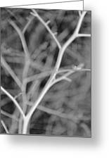 Tree Branches Abstract Monochrome Greeting Card