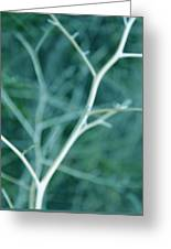 Tree Branches Abstract Teal Greeting Card