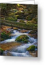 Tree Bridge In The Smokies Greeting Card