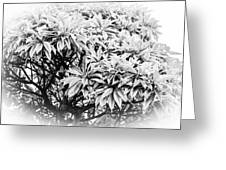 Tree Bush Vignette Greeting Card