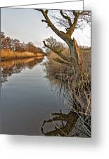 Tree By The River Greeting Card