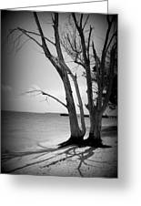 Tree By The Sea Greeting Card