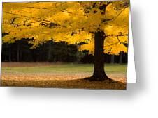 Tree Canopy Glowing In The Morning Sun Greeting Card