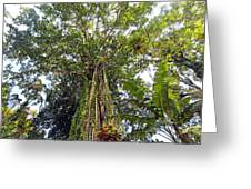 Tree Canopy Greeting Card