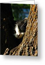 Tree Cat Greeting Card