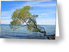 Tree Greeting Card by Charline Xia
